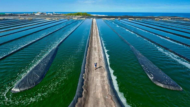 coltivazione-spirulina-vasche - ITALYEXPO DUBAI 2021 - Tolo Green - spirulina.it